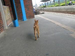 十分駅に帰ると猫がお出迎え