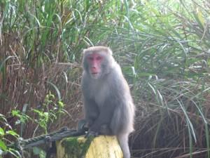 猿もいる。怖い。