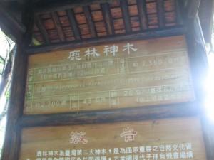 さっきのは鹿林神木。樹齢約2700年とのこと。